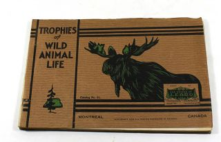 Trophies of Wild Animal Life: House of Learo Catalog No. 51